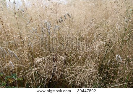 Silver grass in the middle of summer season