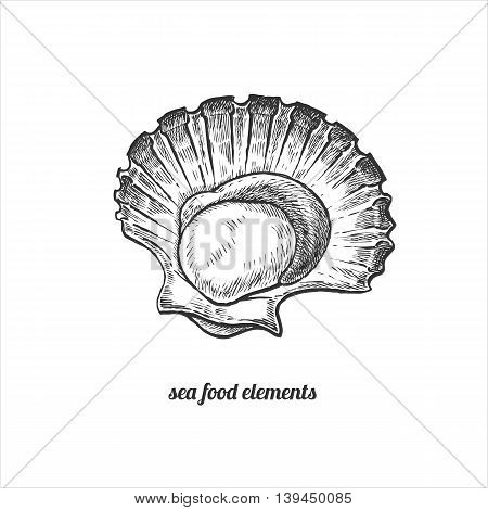 Scallops. Seafood. Vector illustration. Isolated image on white background. Vintage style. Hand drawn seafood image.