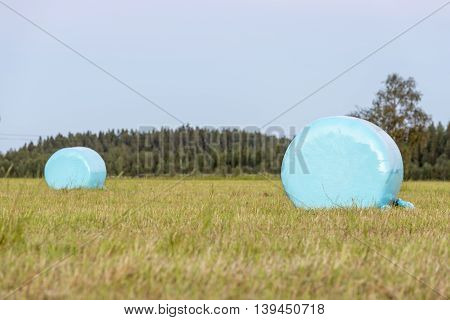 Wrapped Blue Silage Bales in Field with forest in the background.
