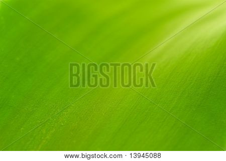 Abstract green background. Macro shot