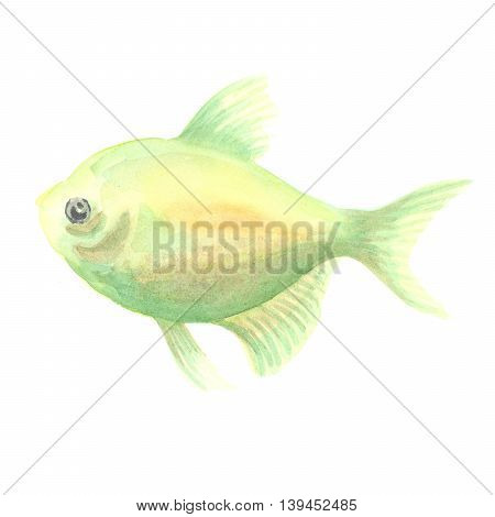 green aquarian small fish a ternetion on a white background. Watercolor painting