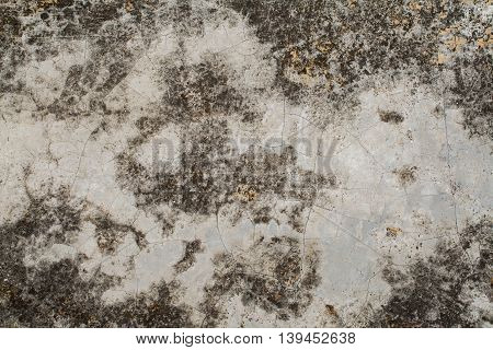 background texture surface cement have moss from rain water is nature