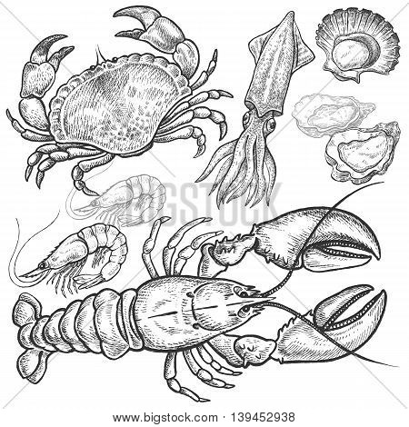 Seafood. Crab lobster squid prawns oysters scallops. Hand drawn seafood set. Vector illustration. Isolated image on white background. Vintage style.