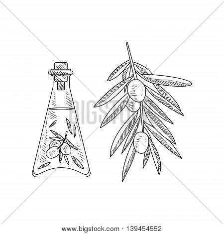 Olive Oil In Glass Bottle And Branch Hand Drawn Realistic Detailed Sketch In Classy Simple Pencil Style On White Background