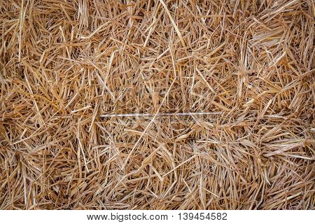 Dry straw in farm as background texture