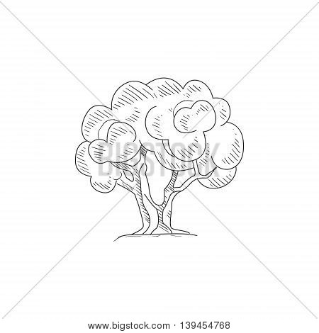 Olive Tree Hand Drawn Realistic Detailed Sketch In Classy Simple Pencil Style On White Background