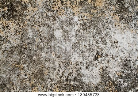 background texture surface cement have black moss nature from rain water