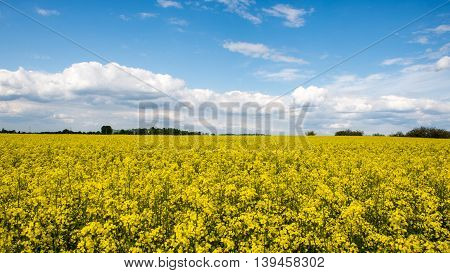 Summer Landscape With Rapeseed Field And Clouds