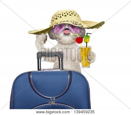 dog enjoys travel and summer holiday-- isolated on white