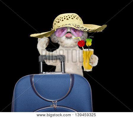 dog enjoys travel and summer holiday-- isolated on black