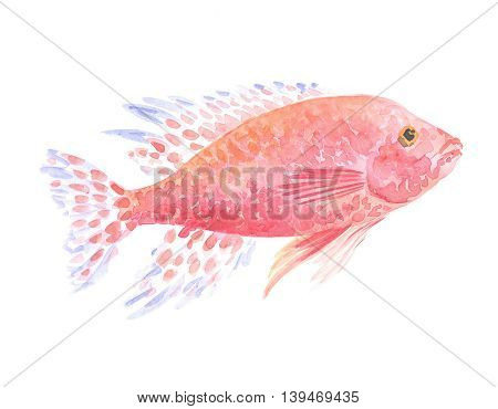 Copadichromis azureus cichlid. Exotic decorative fish on a white background. Watercolor painting