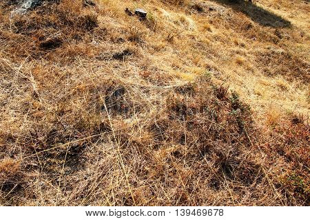 A dry meadow with dead plants.