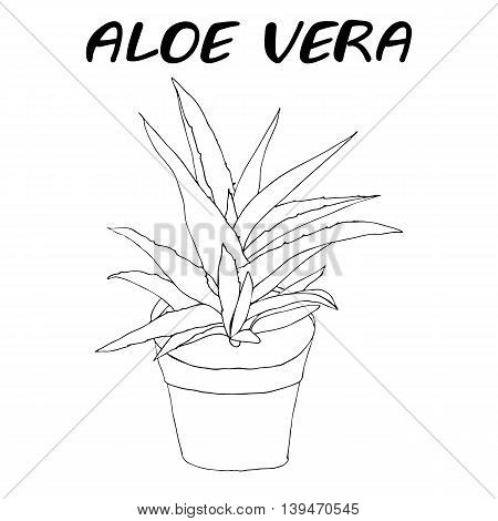 Hand drawn isolated vector illustration of aloe vera plant in a flower pot with text
