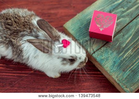 Cute little bunny rabbit with red heart clothespin and gift box on wooden board on timber background