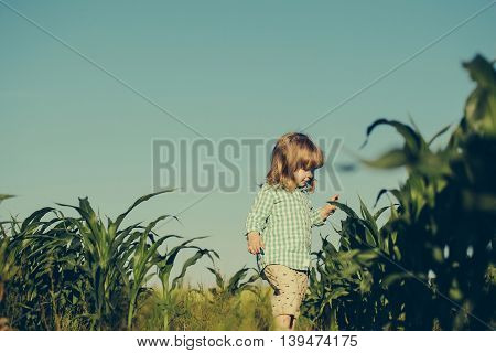 Small boy child with long blonde hair standing among green grass field of corn or maize sunny day outdoor on natural blue sky background in checkered shirt