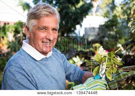 Portrait of confident mature male gardener pruning twigs at garden