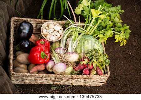 High angle view of fresh organic vegetables in wicker crate at garden