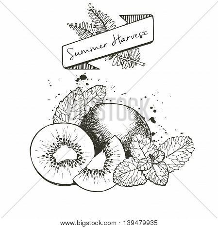 Vector set of summer harvest. Decorated with banner fern leaves and blots. Fresh detox fruit collection. Kiwiw fruit and mint leaves.