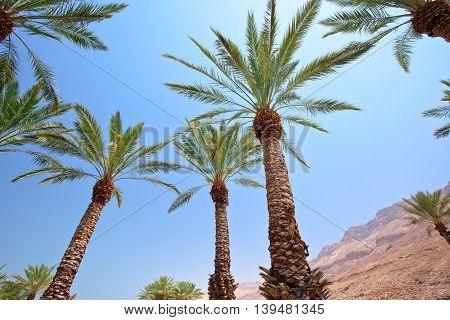 Idyllic Oasis In Desert