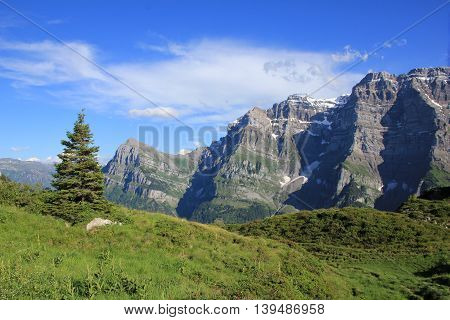 High mountain in Glarus Canton Swiss Alps. Mt Glarnisch. Green meadow with fir. Summer scene.
