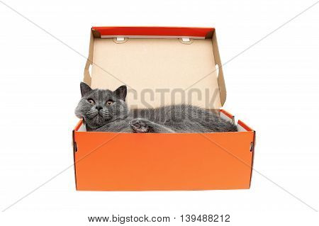 Cat lying in an open box on a white background. horizontal photo.