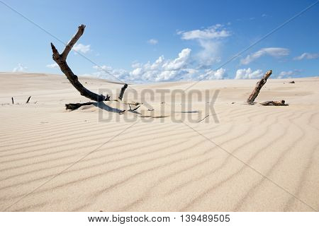 Moving dunes in the Slowinski National Park Poland