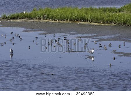 Birds in the shallow waters of the Salt Marshes