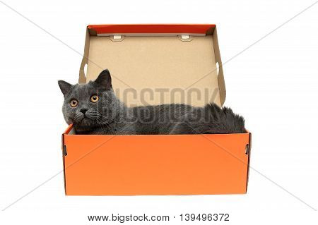 cat with yellow eyes lying in an open cardboard box on a white background. horizontal photo.