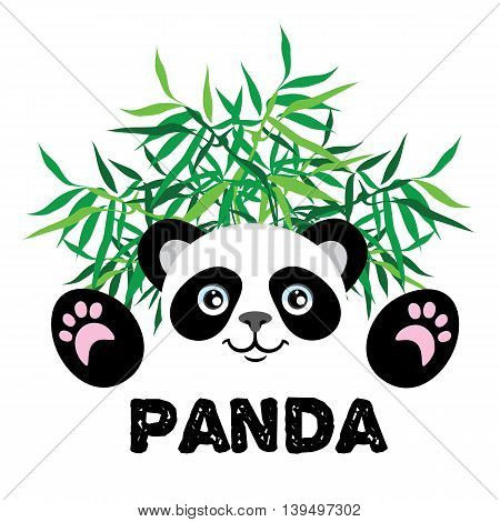 Cute panda in bamboo thickets on a white background.