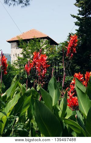 Cannas and tower Bucha complex in Tivat, Montenegro
