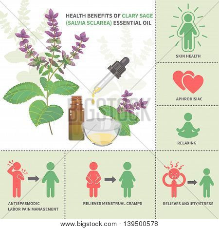 Clary sage Essential Oil Benefits. Aromatherapy infographic. All objects are conveniently grouped and are easily editable.