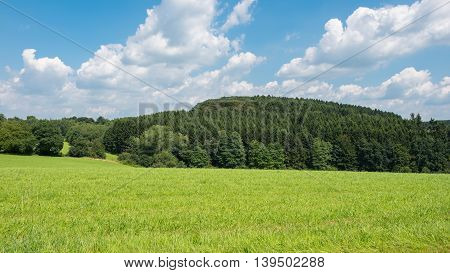 green meadow with forest in the background