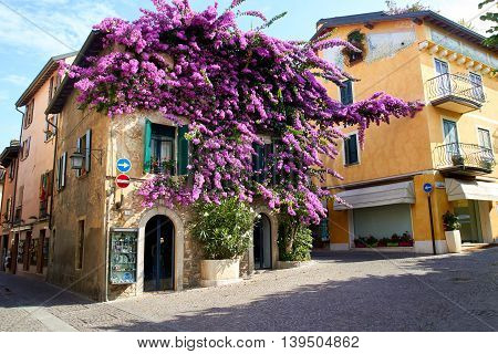 Sirmione beautiful house in the old part of town with bougainvillea glabra