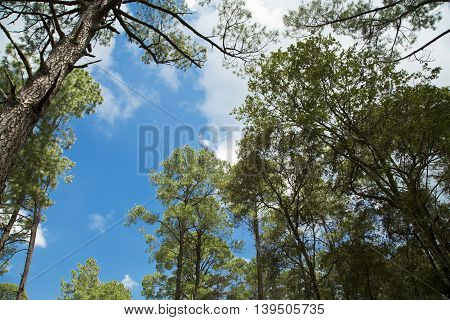 A beautiful green forest. Mexico mountain landscape.