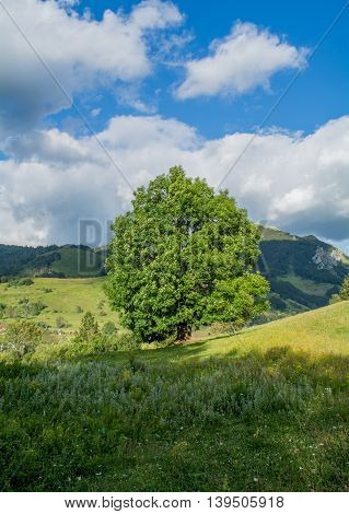 Lonely tree on green field with mountains in back