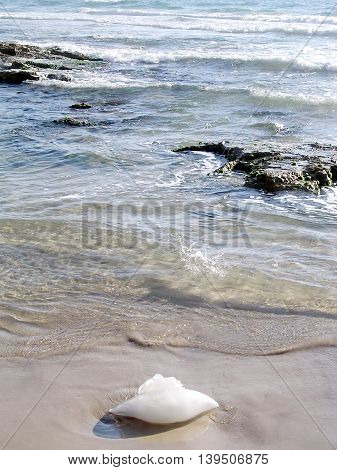 Medusa on the shore of the Mediterranean in Shefayim Israel