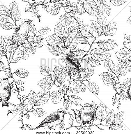 Hand drawn birds sitting on branches with leaves and berries. Black and white image of songbirds. Vector sketch. Monochrome seamless pattern.