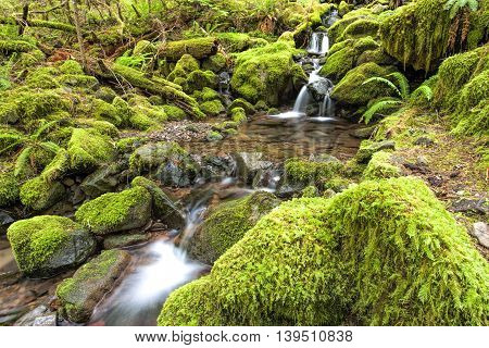 Cascades and small pools in a stream along the Sol Duc Falls trail in Washington.