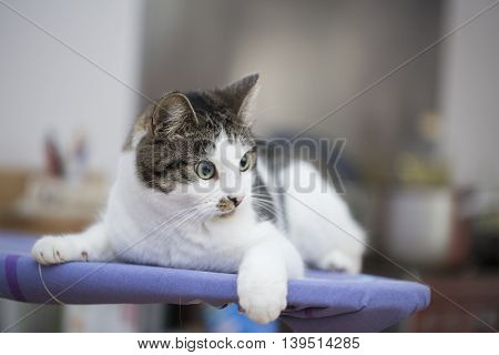 tabby cat relaxing on the ironing board