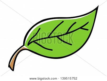 Doodle illustration of a green leaf isolated on white