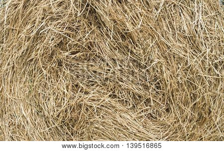Dry hay stack texture closeup in sunny day
