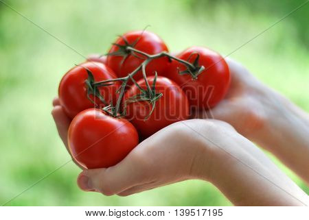 Gardener holding some of his home grown tomatoes