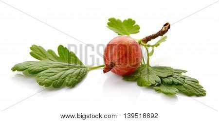 Red Gooseberry Isolated On White