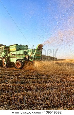 Combine harvester machine tractor in agriculture field.Back view.
