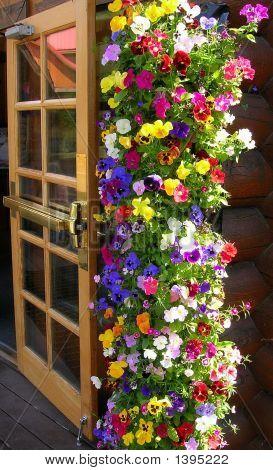 Alaska Door And Flowers