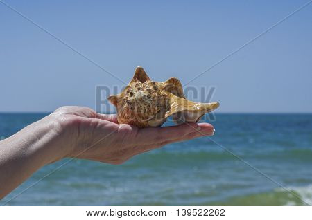 Seashell in man's hand on a background of blue sea
