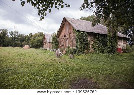 old locked wooden barn ivy-covered. rural landscape