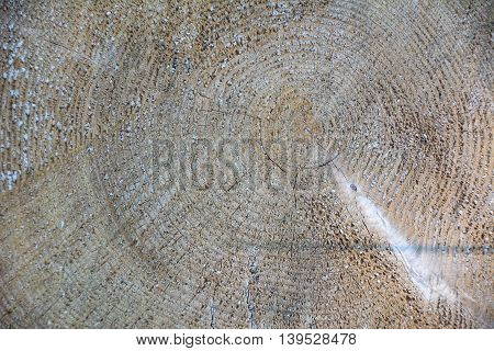 Wood tree lumber texture. Wood texture. Wood texture background. Wood grain. Wooden background
