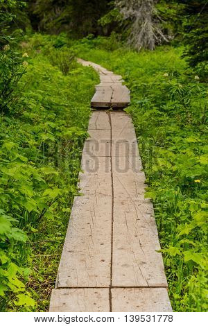 Plank Trail in Green Forest prevents erosion in sensitive terrain