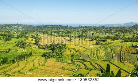 Panorama of the green fields on Bali island, Indonesia.